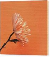Chrysanthemum Orange Wood Print