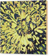 Chrysanthemum Pop Wood Print