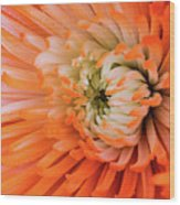 Chrysanthemum Serenity Wood Print