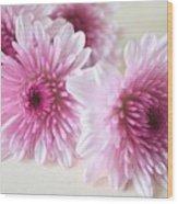 Chrysanthemums #009 Wood Print