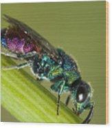 Chrysidid Wasp Wood Print