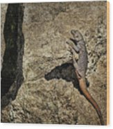 Chuckwalla - Crevice Wood Print