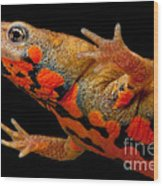 Chuxiong Fire Belly Newt Wood Print
