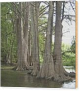 Cibolo Creek Wood Print