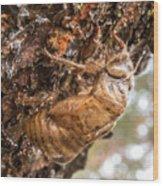 Cicada Exoskeleton Side Wood Print
