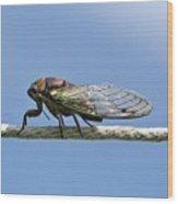 Cicada On The Line Wood Print