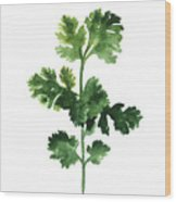 Cilantro Watercolor Art Print Painting Wood Print