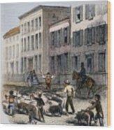 Cincinnati Hog Herding Wood Print