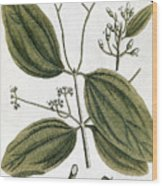 Cinnamon Tree, 1735 Wood Print