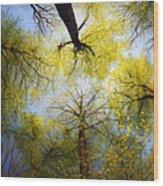 Circle Of Trees Wood Print