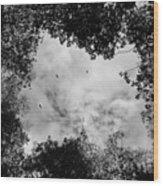 Circling Overhead Wood Print