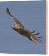 Circling Red Tailed Hawk Wood Print