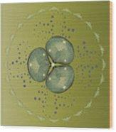 Circularity No 1574 Wood Print