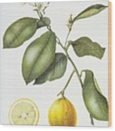 Citrus Bergamot Wood Print by Margaret Ann Eden