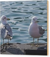 City Gulls Wood Print
