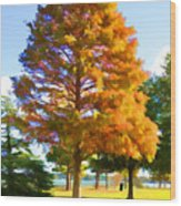 City Park 3 Wood Print