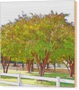 City Park 9 Wood Print