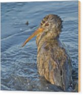 Clapper Rail Wood Print