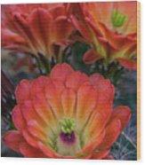 Claret Cup Cactus Flowers  Wood Print