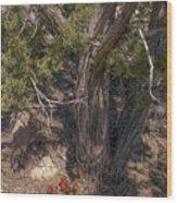 Claret Cup Cactus #2 Wood Print