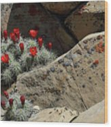 Claret Cup Cactus Nestled In Fractured Sandstone Wood Print