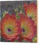 Claret Cup Cactus - Three Of A Kind  Wood Print
