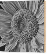 Classic Black And White Sunflower Wood Print