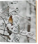 Classic Cardinal In Snow Wood Print
