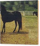 Classic Morgan Horses Wood Print