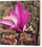 Classic Pink Wood Print