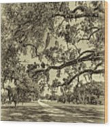 Classic Southern Beauty - Evergreen Plantation -sepia Wood Print