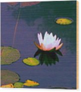 Clear Reflections Lotus Wood Print