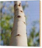 Clear Spot Wood Print
