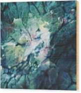 Clear Streams Wood Print by Shirley McMahon