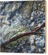 Clear Water Level With Twigs Wood Print