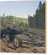 Clearcut Logging Site Wood Print