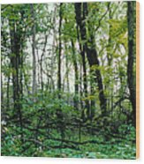 Clearing Glimpsed 2 Wood Print