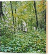 Clearing Glimpsed 6 Wood Print