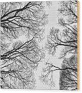 Clearings Wood Print