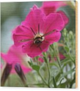 Clearwing Hummingbird Moth At Work In Patch Of Petunias Wood Print