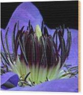 Clematis 8 Wood Print