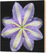 Clematis Backside Wood Print