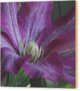 Clematis Close-up Wood Print