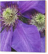 Clematis Detail Wood Print