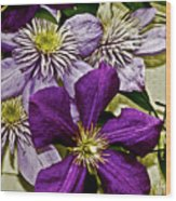 Purple Clematis Flower Vines Wood Print