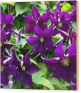 Clematis Flowers Wood Print by Corey Ford