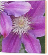 Clematis Flowers Wood Print