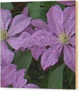 Clematis In The Rain Wood Print