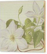 Clematis Jackmanni Alba Wood Print