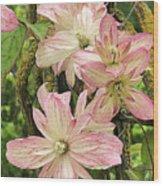 Clematis Montana Marjorie 1060  Wood Print